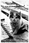 Сайт о животных. Котята, щенята, рыбки, хомяки и другие питомцы.