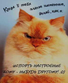 http://cat.lg.ua/img/fun_photos/0001/1422.jpg